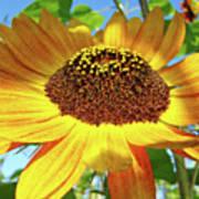 Office Art Prints Sunflowers Giclee Prints Sun Flower Baslee Troutman Art Print