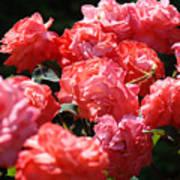 Office Art Roses Pink Rose Flowers Floral Garden Art Print