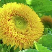 Office Art Sunflower Sun Flowers Giclee Baslee Troutman Art Print