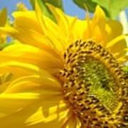 Office Art Sunflowers Giclee Art Prints Sun Flowers Baslee Troutman Art Print