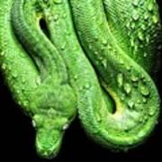 Oh So Green Viper Art Print