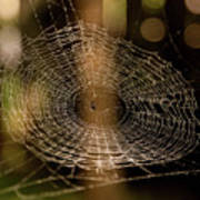 Oh What Tangled Webs.... Art Print