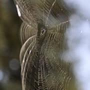 Oh What Webs We Weave Art Print
