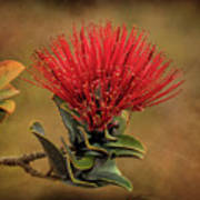 Ohia Lehua Flower Volcanos National Park Art Print