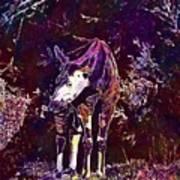 Okapi Okapia Mondonga Mammals  Art Print