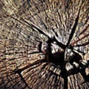 Old Dry Stump Art Print