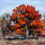 Old Fall Oak Art Print
