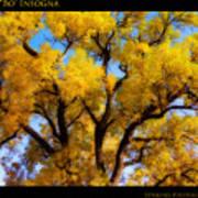 Old Giant  Autumn Cottonwood Orton Art Print