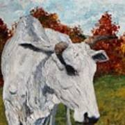 Old Grey Cow Art Print