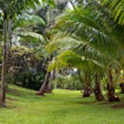 Old Hawaiian Garden Art Print