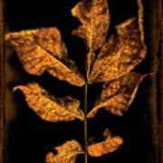 Old Hickory Leaf Art Print
