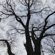 Old Oak Overcast Art Print
