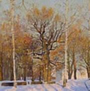 Old Oak-tree In Kolomenskoye Art Print