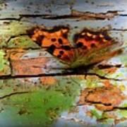 Old Paint On Wood Art Print