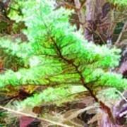Old Pine Tree 1 Art Print