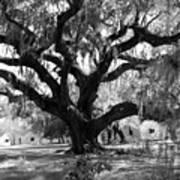 Old Plantation Tree Art Print