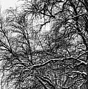 Old Tree 6 Art Print