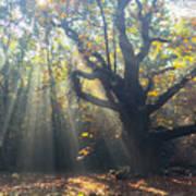 Old Tree And Sunbeams Art Print