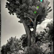 Old Tree In Sicily Art Print