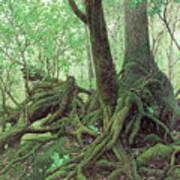 Old Tree Root Art Print