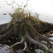 Old Tree Stump With Flowers Art Print