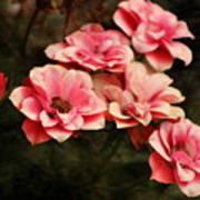 Old Victorian Fuchsia Pink Rose Art Print