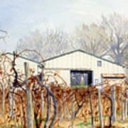 Old Vines Art Print