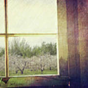 Old Window Looking Out To Apple Orchard Art Print by Sandra Cunningham