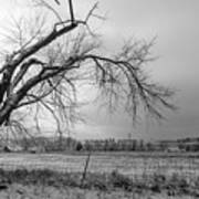 Old Winter Tree Grayscale Art Print