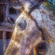 Old Wooden Horse Head Art Print