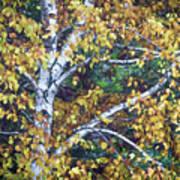 Old Yellow Birch Art Print