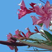 Oleander Flowers Wilting In The Brutal Florida Sun    Art Print