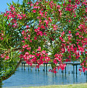 Oleander On Melbourne Harbor In Florida Art Print