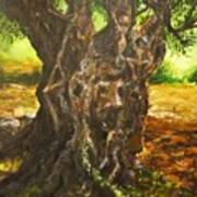 Olive Tree Rooted 1 Art Print