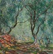Olive Trees In The Moreno Garden Art Print