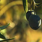 Olives #2 Art Print