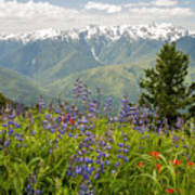 Olympic Mountain Wildflowers Art Print
