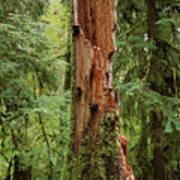 Olympic Rainforest #1 Art Print