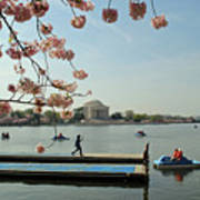 On The Cherry Blossom Dock Art Print