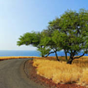 On The Road To Lapakahi Art Print