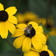 One bee over the flower's nest Art Print
