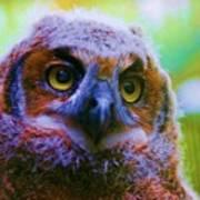 Opalescent Owl Art Print