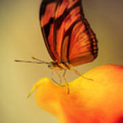 Orange And Black Butterfly Sitting On The Yellow Petal Art Print