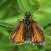 Orange And Brown Moth Art Print