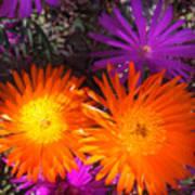 Orange And Fuchsia Color Flowers Art Print