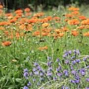 Orange And Purple Dream Flowers Art Print