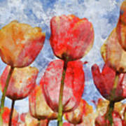 Orange And Yellow Tullips With Blue Sky Art Print