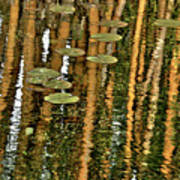 Orange Bamboo Abstract, Reflection On Water Art Print