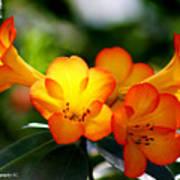 Orange Bells  Art Print