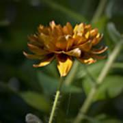 Orange Blanket Flower Art Print